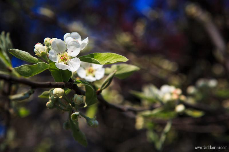 bloom_1