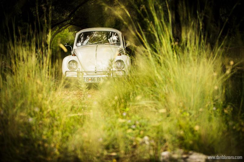 grass_beetle