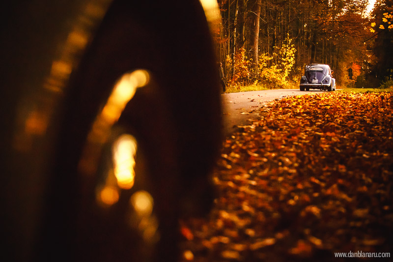 vw_beetle_in_autumn_leaves-11