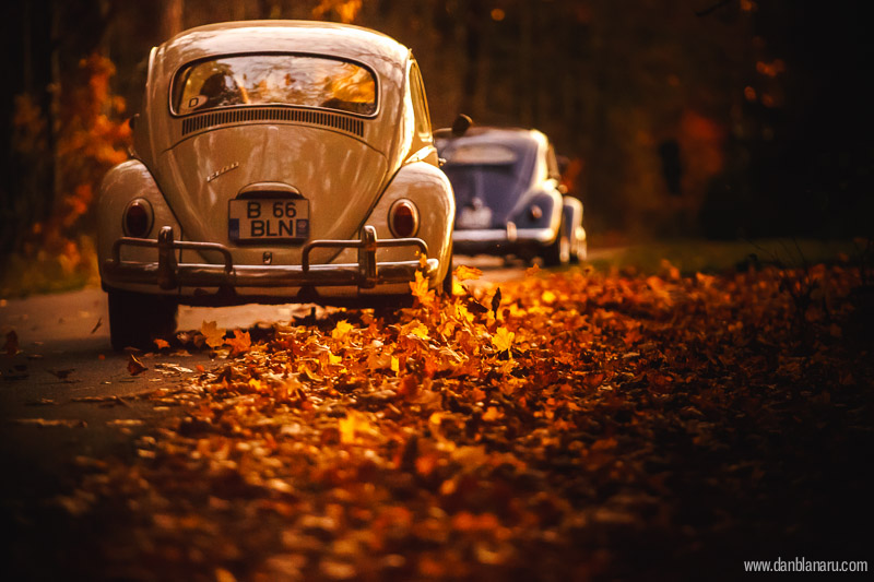 vw_beetle_in_autumn_leaves-13