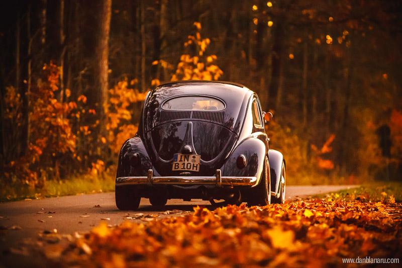 vw_beetle_in_autumn_leaves-14
