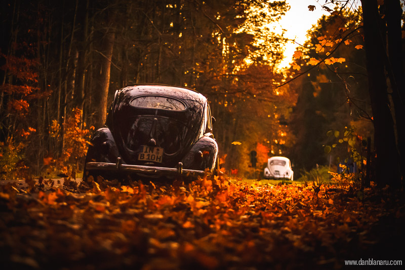 vw_beetle_in_autumn_leaves-17