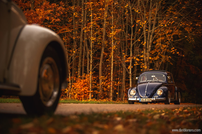 vw_beetle_in_autumn_leaves-6