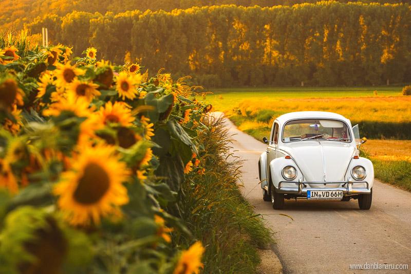 perlutza_sunflower_1