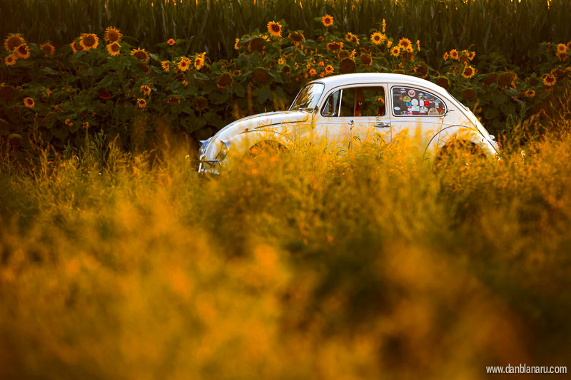 perlutza_sunflower_2