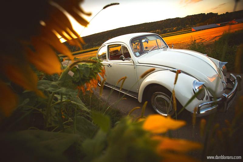perlutza_sunflower_3